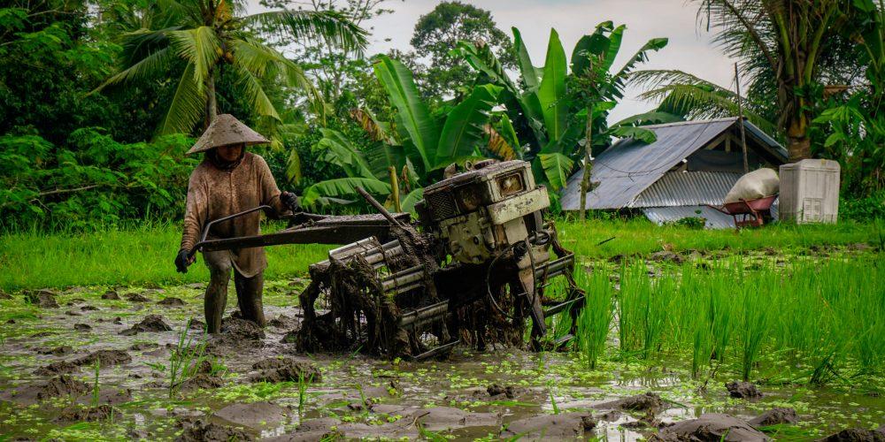Farmer preparing her field