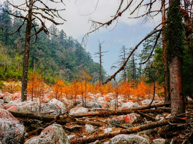 Manaslu Trek - Trek from Bhimtang to Dharapani