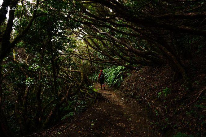 Hiking the rainforest of Anaga mountain on Tenerife